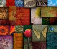 Testes padrões ásperos da natureza do tom da terra do mosaico Imagem de Stock