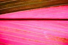 Testes padrões abstratos da folha cor-de-rosa Imagem de Stock Royalty Free