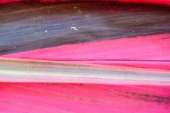 Testes padrões abstratos da folha cor-de-rosa Fotos de Stock Royalty Free