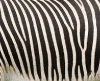 Testes padrões abstratos da zebra Foto de Stock Royalty Free