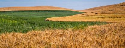 Testes padrões agrícolas fotos de stock