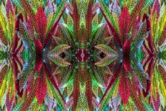 Testes padrões coloridos das folhas Foto de Stock