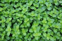 Testes padrões coloridos das folhas verdes Imagem de Stock