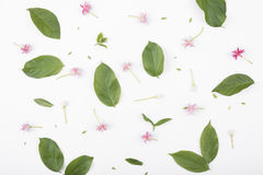 Testes padrões com folhas e as flores verdes no fundo branco Fotografia de Stock Royalty Free