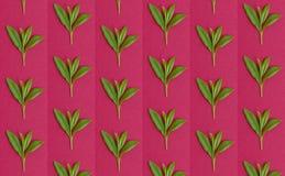 Testes padrões com folhas frescas Fotografia de Stock