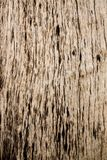 Testes padrões, cores e testes padrões de madeira naturais da tabela Imagens de Stock Royalty Free