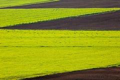 Testes padrões cultivados do campo de exploração agrícola Fotografia de Stock Royalty Free