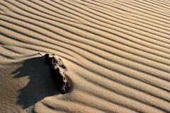 Testes padrões da areia Foto de Stock