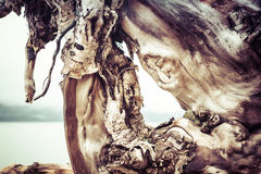 Testes padrões da madeira lançada à costa Foto de Stock