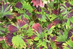 Testes padrões das folhas de surpresa Fotos de Stock
