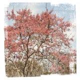 Testes padrões de florescência delicados da árvore textured perto acima Imagens de Stock