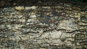 Testes padrões de madeira da grão do fundo Foto de Stock Royalty Free