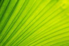 Testes padrões de uma folha de palmeira para o fundo foto de stock