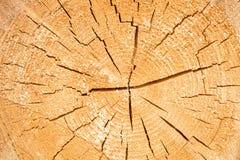Testes padrões do círculo da árvore do crescimento anual Imagem de Stock Royalty Free