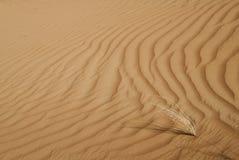 Testes padrões do deserto Imagem de Stock