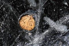 Testes padrões do gelo com a folha congelada do outono Fotos de Stock