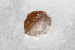 Testes padrões do gelo com a folha congelada do outono Fotografia de Stock