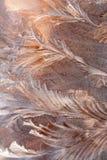 Testes padrões do inverno Fotografia de Stock Royalty Free