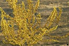 Testes padrões do musgo que crescem em um log Foto de Stock