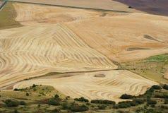 Testes padrões do trigo, Palouse, Washington Fotos de Stock