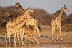 Testes padrões dourados 2 de África Fotografia de Stock Royalty Free