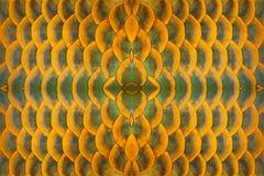 testes padrões e pele de peixes de Arowana fotografia de stock royalty free