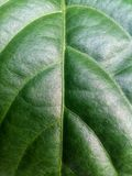 Testes padrões e texturas da folha verde fotografia de stock