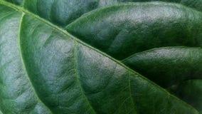 Testes padrões e texturas da folha verde foto de stock