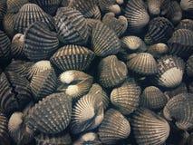 Testes padrões e texturas de moluscos em grande escala fotos de stock