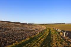 Testes padrões e texturas de uma paisagem do outono Imagem de Stock Royalty Free