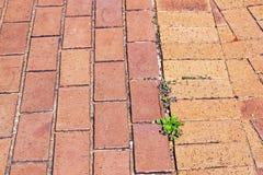 Testes padrões e texturas do tijolo vermelho com plantas verdes Fotografia de Stock Royalty Free