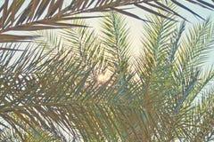 Testes padrões em folha de palmeira fotos de stock royalty free