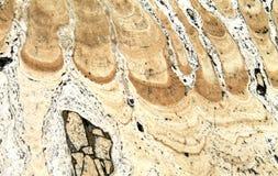 Testes padrões estranhos na fatia de pedra Imagens de Stock Royalty Free