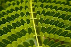 Testes padrões feitos pelas folhas Imagem de Stock Royalty Free