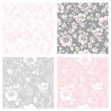 Testes padrões florais sem emenda Foto de Stock