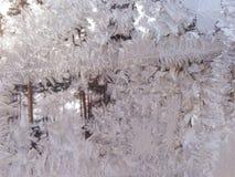 Testes padrões gelados no vidro do inverno Testes padrões fabulosos Foto de Stock Royalty Free