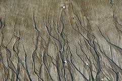 Testes padrões na areia da praia criada pela água Foto de Stock Royalty Free