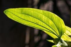 Testes padrões nas folhas expostas à luz solar fotografia de stock royalty free