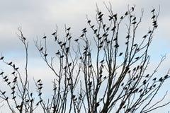 Testes padrões pequenos do pássaro Foto de Stock