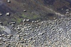 Testes padrões rochosos na cama de mar da baixa maré Imagens de Stock