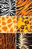 Testes padrões sem emenda animais Imagem de Stock Royalty Free
