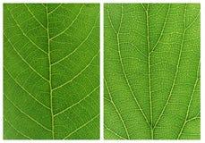 Testes padrões verdes dos fundos da folha Fotografia de Stock Royalty Free