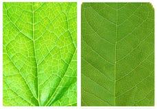 Testes padrões verdes dos fundos da folha Fotos de Stock