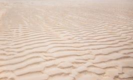 Testes padrões Windswept na praia Fotografia de Stock Royalty Free