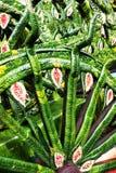 Testes padrões da folha do cartwheel Fotos de Stock