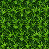 Testes padrões sem emenda do vetor do fundo da marijuana Fotos de Stock