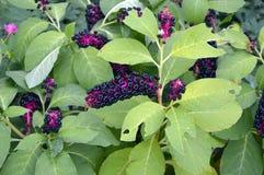 Testikel von Blumen, Samen stockfotografie