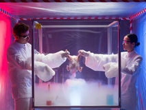 Testing a bird carcass in a laboratory. Two scientists standing on either side of an isolation or sterility tent holding onto the carcass of a bird over a white Stock Photo