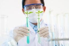 Testing GMO Plants stock image
