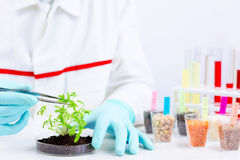 Testing gmo products Royalty Free Stock Images
